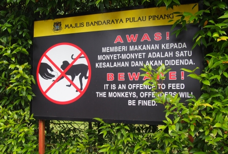 Do not feed the monkeys!!!!  Seriously, they are aggressive.