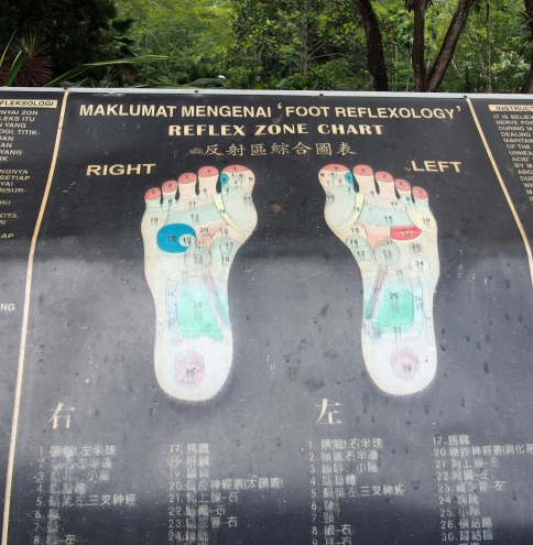 Map of the organ area on the foot.