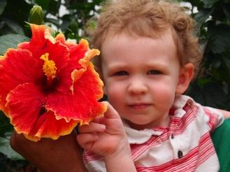 Hibiscus as big as B's head